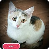 Adopt A Pet :: Amy - Fairborn, OH