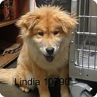 Adopt A Pet :: Linda - baltimore, MD