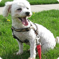 Adopt A Pet :: Winnie-adoption pending - Schaumburg, IL