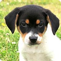 Adopt A Pet :: Berkley - Glastonbury, CT