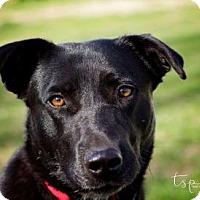 Adopt A Pet :: Louise - Springfield, MO