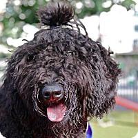 Adopt A Pet :: ACE - Boston, MA