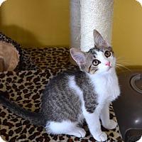 Adopt A Pet :: Julius - Island Park, NY