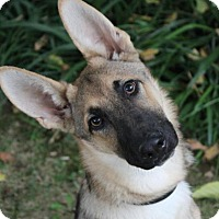 Adopt A Pet :: JUNIOR - Red Bluff, CA