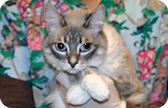 Domestic Shorthair Cat for adoption in Wildomar, California - Ladybug