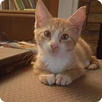 Adopt A Pet :: Donovan - Alpharetta, GA