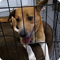 Adopt A Pet :: Jade - Ogden, UT