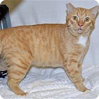 Adopt A Pet :: Major Tom - Lincoln, CA