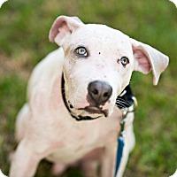 Adopt A Pet :: Mike - Houston, TX