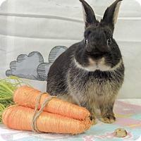 Adopt A Pet :: Norton - Williston, FL