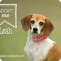Adopt A Pet :: Leah - Pearland, TX