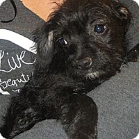 Adopt A Pet :: Cade - Salem, NH