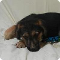 Adopt A Pet :: Ernie ADOPTED!! - Antioch, IL