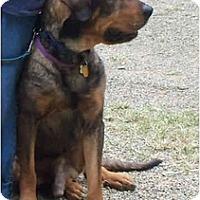 Adopt A Pet :: Dignity - Wellington, OH