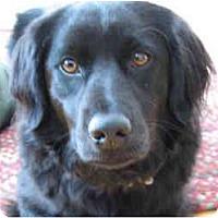 Adopt A Pet :: Grapelli - kennebunkport, ME