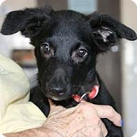 Adopt A Pet :: Mason *puppy!* - Canoga Park, CA