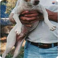 Adopt A Pet :: COLBY - Phoenix, AZ