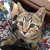 Adopt A Pet :: Spud - Summerville, SC