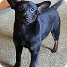 Adopt A Pet :: Hardy