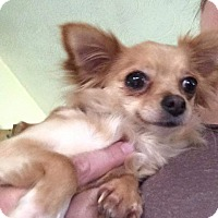 Adopt A Pet :: Tinkerbell - Newport, KY