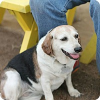 Adopt A Pet :: Molly Moo - Creston, CA