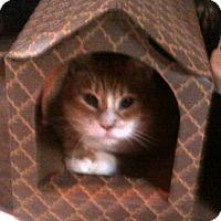 Adopt A Pet :: Hadley - Hackettstown, NJ