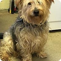 Adopt A Pet :: VERN - Cadiz, OH