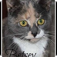 Calico Cat for adoption in Gonic, New Hampshire - Betsey