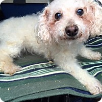 Adopt A Pet :: Ulli - Oak Ridge, NJ