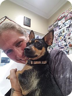 Miniature Pinscher/Chihuahua Mix Dog for adoption in Gilbert, Arizona - Lana