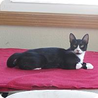 Adopt A Pet :: America - Ridgway, CO