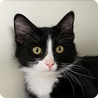 Adopt A Pet :: Charo - Red Bluff, CA