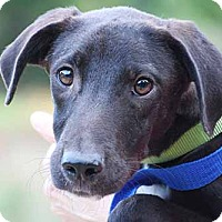 Adopt A Pet :: Wyatt - South Bend, IN