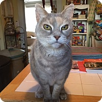 Adopt A Pet :: Betty Ann - Rutherfordton, NC