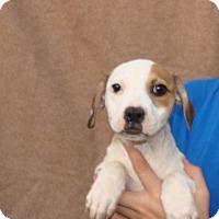 Adopt A Pet :: Buttons - Oviedo, FL