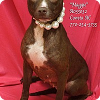 Adopt A Pet :: Maggie - Newnan City, GA