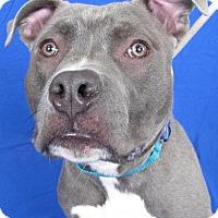 Adopt A Pet :: Monty - Wauwatosa, WI