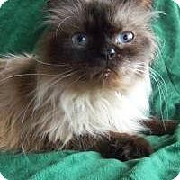 Adopt A Pet :: Mosby - Ennis, TX