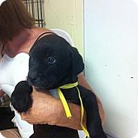 Adopt A Pet :: Recon - El Paso, TX