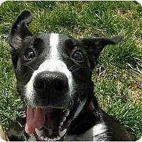 Adopt A Pet :: Allie - Meridian, ID