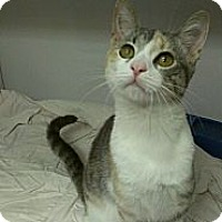 Adopt A Pet :: Jessica Alba - Richboro, PA
