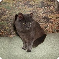 Adopt A Pet :: Simon - Oxford, NY