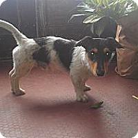 Adopt A Pet :: Leonardo - Minneapolis, MN