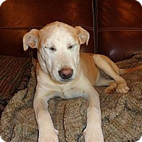 Adopt A Pet :: Sandy - Warrenton, NC