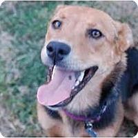 Adopt A Pet :: Diana - San Francisco, CA