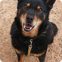 Adopt A Pet :: Alice - Alamogordo, NM