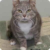Adopt A Pet :: Tulip - Dover, OH