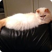 Adopt A Pet :: Rosie - Davis, CA
