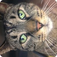 Adopt A Pet :: Kane - Newport Beach, CA