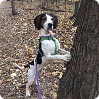 Adopt A Pet :: Nettie - Davison, MI